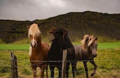 BUY & SELL HORSES